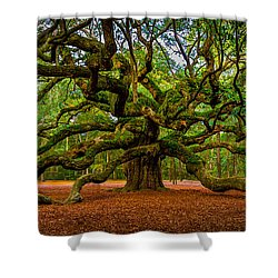 Angel Oak In Charleston Shower Curtain by David Smith