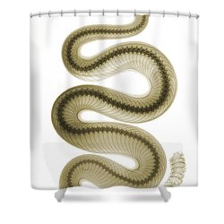 Southern Pacific Rattlesnake, X-ray Shower Curtain