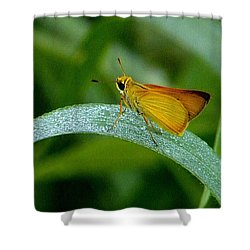 Southern Skipperling Butterfly  000 Shower Curtain