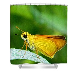 Southern Skipperling Butterfly 001  Shower Curtain