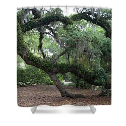Southern Support Shower Curtain by David and Lynn Keller