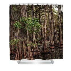 Southern Swamp 2 Shower Curtain by Ester  Rogers