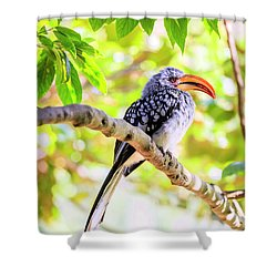 Southern Yellow Billed Hornbill Shower Curtain by Alexey Stiop