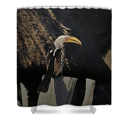 Shower Curtain featuring the digital art Southern Yellow Billed Hornbill by Ernie Echols