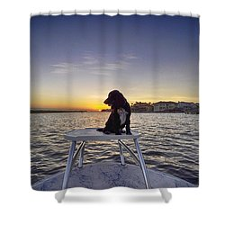 Spaniel At Sunset Shower Curtain
