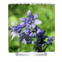 Spanish Bluebell Shower Curtain