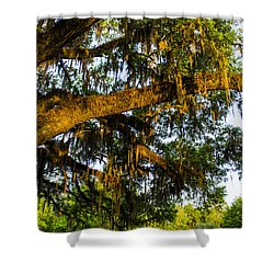 Spanish Moss In The Gloaming Shower Curtain