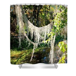 Spanish Moss Over The Swamp Shower Curtain by Carol Groenen