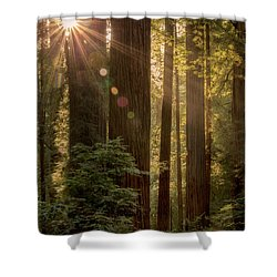 Sparkle In The Redwoods Shower Curtain