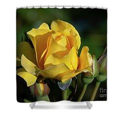 Sparkle N Shine Rose 6 Shower Curtain