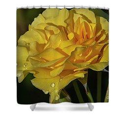 Sparkle N Shine Rose 7 Shower Curtain