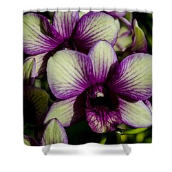 Sparkly Moth Orchid Shower Curtain