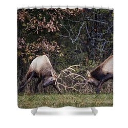 Shower Curtain featuring the photograph Sparring Bachelor Bulls In Boxley Valley by Michael Dougherty