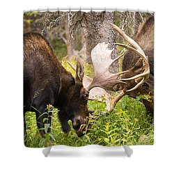 Shower Curtain featuring the photograph Sparring  by Aaron Whittemore