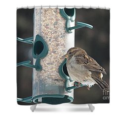 Sparrow And Seed Shower Curtain