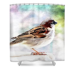 Sparrow Beauty 0004. Shower Curtain