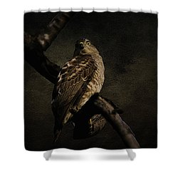 Sparrow Hawk Shower Curtain