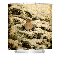 Shower Curtain featuring the photograph Sparrow In Winter II - Textured by Angie Tirado