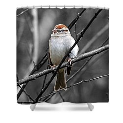 Sparrow Shower Curtain by Paul Wilford