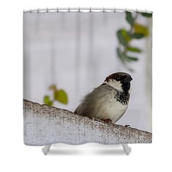 Sparrow Shower Curtain by Ramabhadran Thirupattur