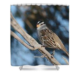 Sparrow Time Shower Curtain by Fraida Gutovich
