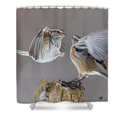 Shower Curtain featuring the photograph Sparrows Fight by Mircea Costina Photography