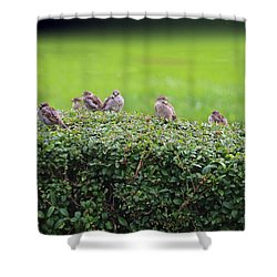 Sparrows Gathering Place  Shower Curtain by Yumi Johnson
