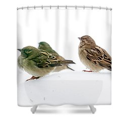 Sparrows In The Snow Shower Curtain by Eleanor Abramson