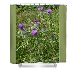 Spear Plume Thistles - Emblem Of Scotland Shower Curtain by Phil Banks