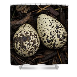 Speckled Killdeer Eggs By Jean Noren Shower Curtain by Jean Noren