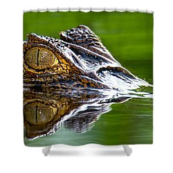 Spectacled Caiman Caiman Crocodilus Shower Curtain by Panoramic Images