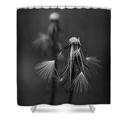 Spent Wishes Shower Curtain