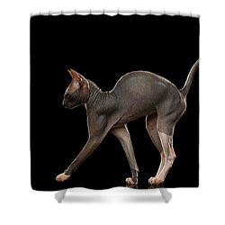 Sphynx Cat Funny Standing Isolated On Black Mirror Shower Curtain