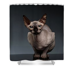 Sphynx Cat Sits In Front View On Black  Shower Curtain