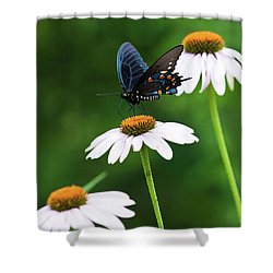 Spice Bush Swallowtail Echinacea Trio Shower Curtain