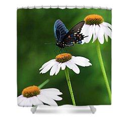 Spice Bush Swallowtail Echinacea Trio Shower Curtain