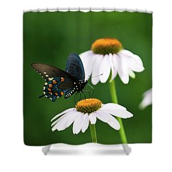 Spice Bush Swallowtail On Echinacea 2 Shower Curtain