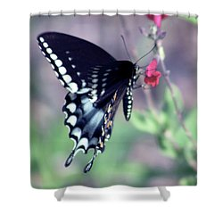 Spicebush Swallowtail Butterfly Shower Curtain