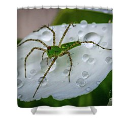 Spider And Flower Petal Shower Curtain