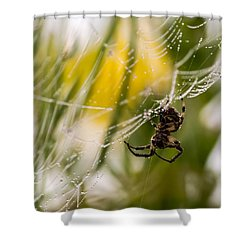 Spider And Spider Web With Dew Drops 04 Shower Curtain