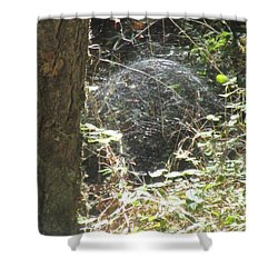 Shower Curtain featuring the photograph Spider Dome by Marie Neder