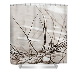 Spider Driftwood Shower Curtain