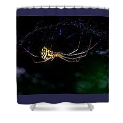 Spider Hanging In Web Shower Curtain by John Brink