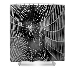 Spider In A Dew Covered Web - Black And White Shower Curtain