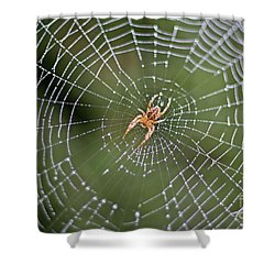 Spider In A Dew Covered Web Shower Curtain