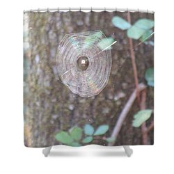 Shower Curtain featuring the photograph Spider In The Round by Marie Neder