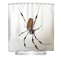 Spider In The Woods Shower Curtain