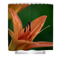 Shower Curtain featuring the photograph Spider Lily 2 by Cathy Harper