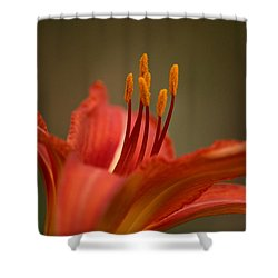 Spider Lily Shower Curtain by Cathy Harper