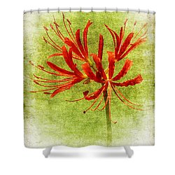 Spider Lily Shower Curtain